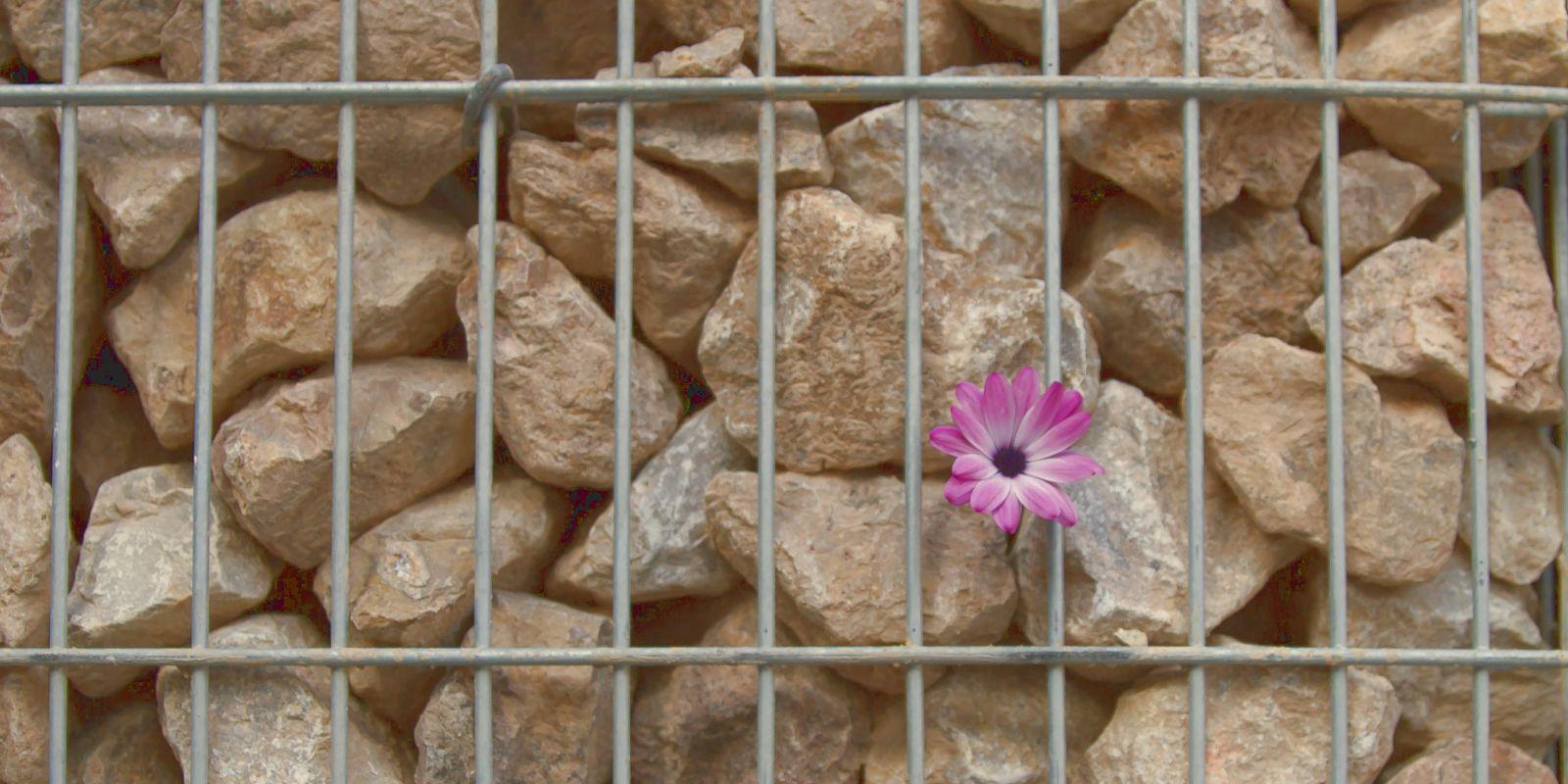 Kreative Gartengestaltung mit Steingabionen