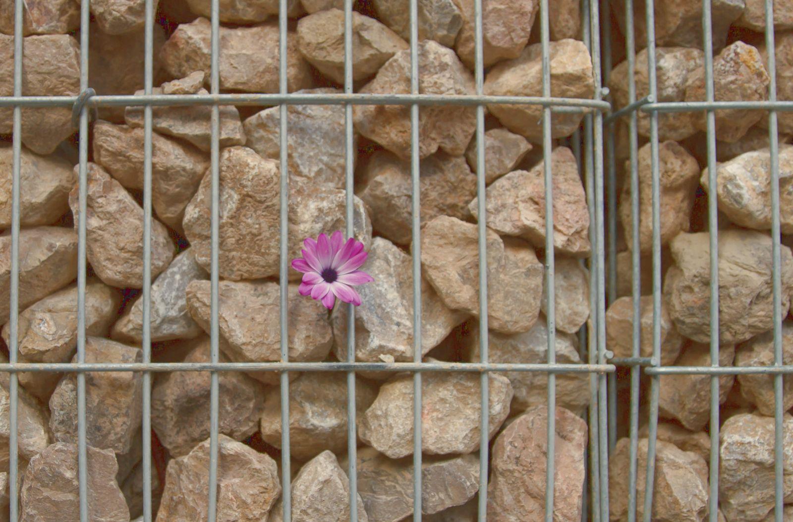 Gabione mit Steinen und Blumen