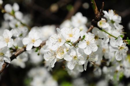 Garten: Arbeiten im April, jetzt ist Hauptaussaatzeit