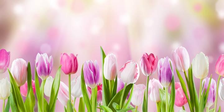 Arbeiten im Aprilgarten: Tipps, Tricks und der Frühling kann kommen