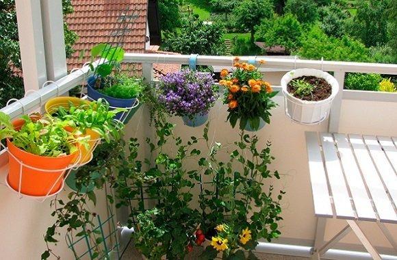Mit Balkonpflanzen den Balkon gestalten & selbst Gemüse wie Tomaten pflanzen