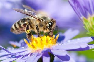 Dynamischer Agroforst schützt Bienen und Insekten