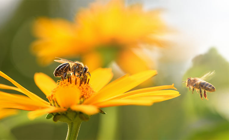 Bienenfreundliche Pflanzen