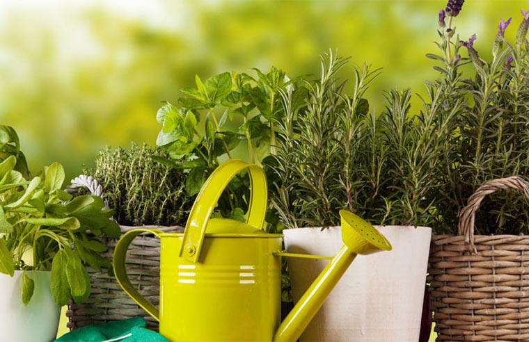 Biogarten leicht gemacht ökologische Tipps
