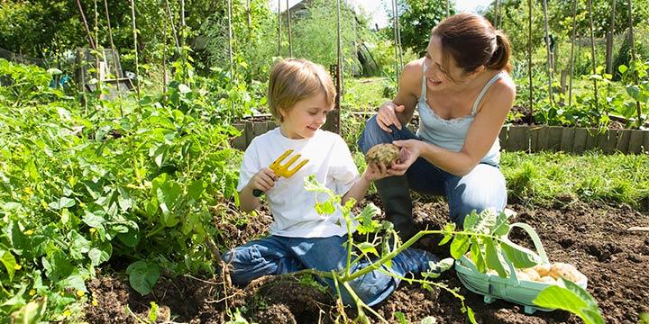 Tipps und Tricks für einen eigenen Biogarten