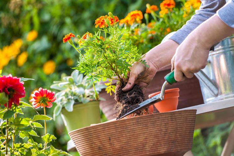 Bienenfreundliche Gartenplanung