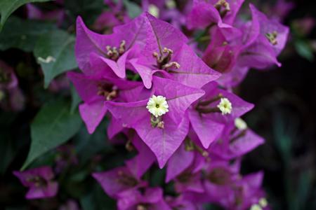 Homöopathie für Rosen, Orchideen und andere Pflanzen