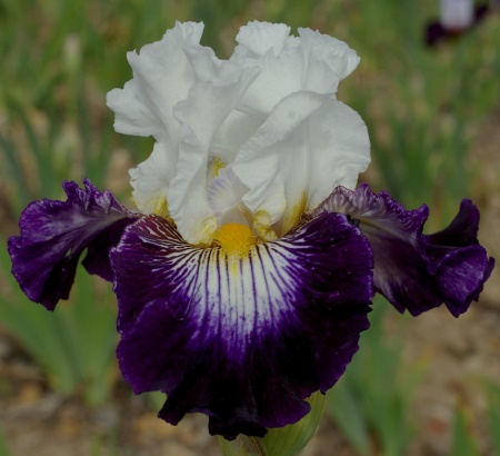 Chelsea Flower Show 2013: Rückbesinnung auf den Naturgarten