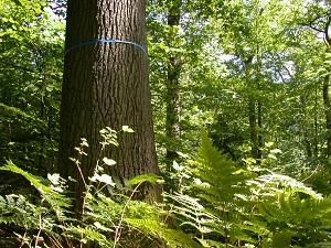 Ein Familienbaum in einem Friedwald ©FriedWald