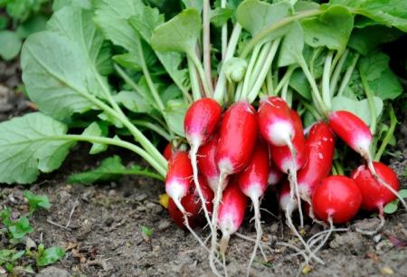 Garten: Arbeiten im Februar