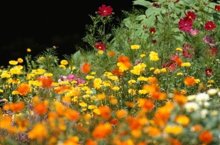 Garten Tipps und Gartenarbeit im Juli