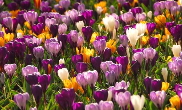 Der Garten im März: Die schöne grüne Saison schickt ihre Vorboten