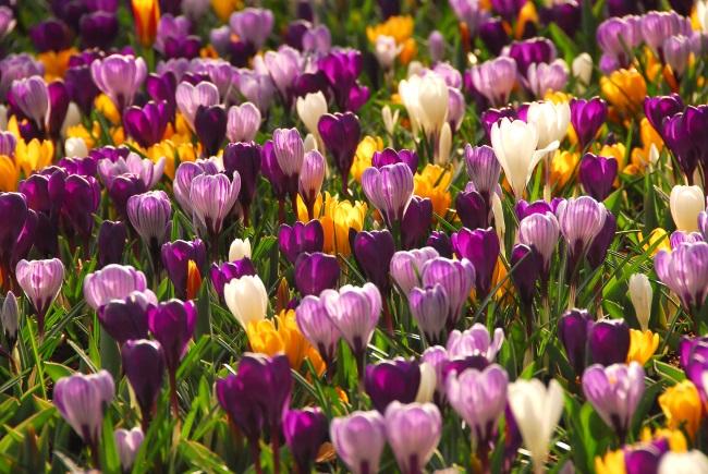 Garten: Arbeiten im März und für den Frühling