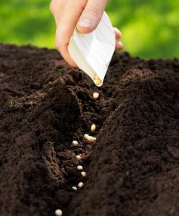 Garten Arbeit im März: Tipps, Pflege und Aussaat für den Start in den Frühling