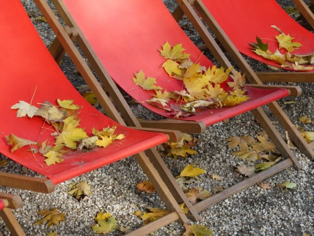 Bio Garten Tipps und Gartenarbeit im Oktober und Topfpflanzen überwintern