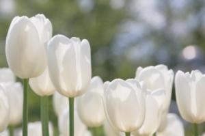 Garten Tipps für den April