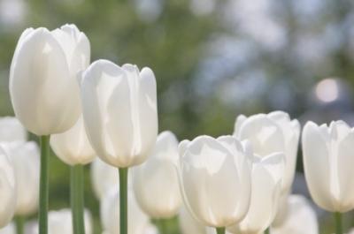 Garten Tipps im April: Rasenpflege, Frühlingsblüher und Aussaat