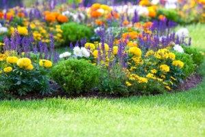 gartentipps f r den april rasen str ucher pflanzen und mehr. Black Bedroom Furniture Sets. Home Design Ideas
