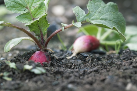 Gartenarbeiten im Mai: Tipps und Tricks auch für Balkongärtner