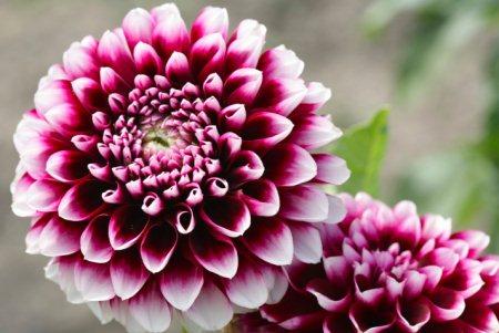 Gartenarbeit und gartentipps im mai - Gartenarbeiten im mai ...