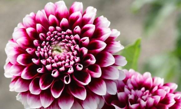 Gartentipps für den Wonnemonat Mai