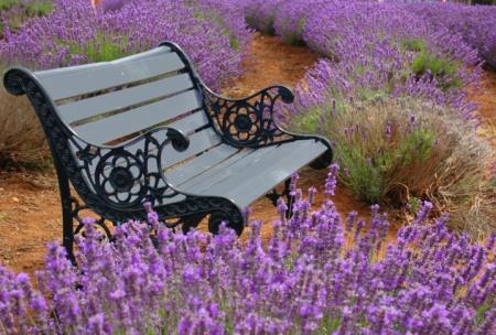 Garten Tipps und Gartenarbeit im August