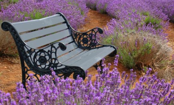 Garten(t-)räume und Erntezeit: Gartentipps für August