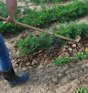 Die richtige Pflege der Gartenböden ist für das gesunde Wachstum der Pflanzen entscheidend
