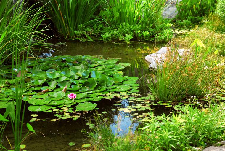 Sauerstoffversorgung beim Teich sicherstellen