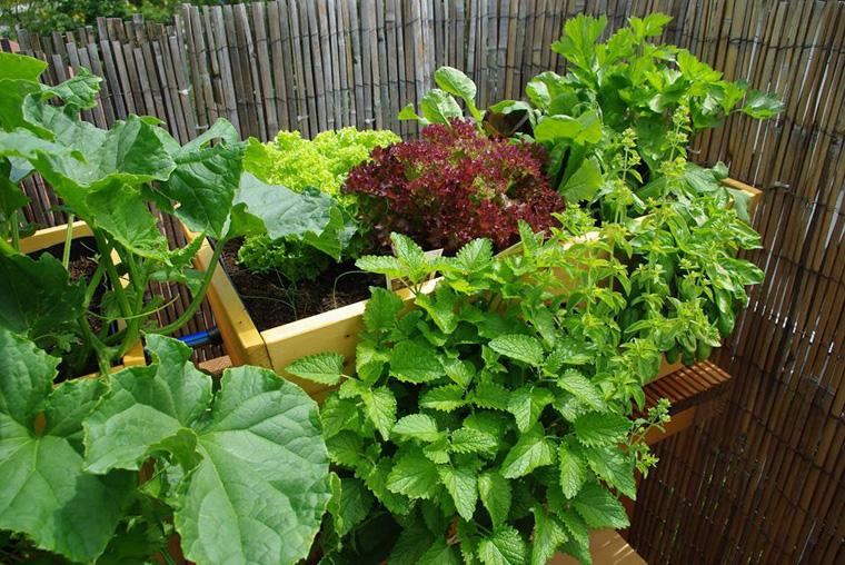 Urban Gardening Auf Dem Balkon Urban Farming Eigene Biofarm Auf Dem
