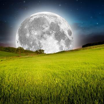 Pflanzen, säen, ernten: Höherer Ertrag dank Mondkalender?
