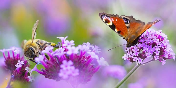 Insektenfreundliche Pflanzen für ein gesundes Ökosystem