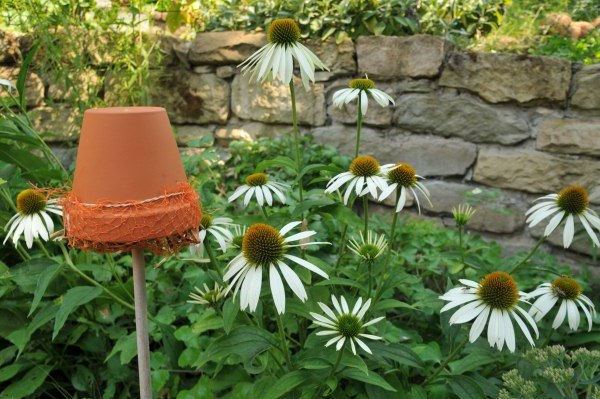 Insektenhotel selber bauen für Ohrenklammer und Florfliegen