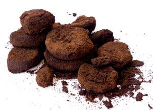 Kaffeesatz & schwarzer Tee: So einfach gelingt selbstgemachter Bio Dünger