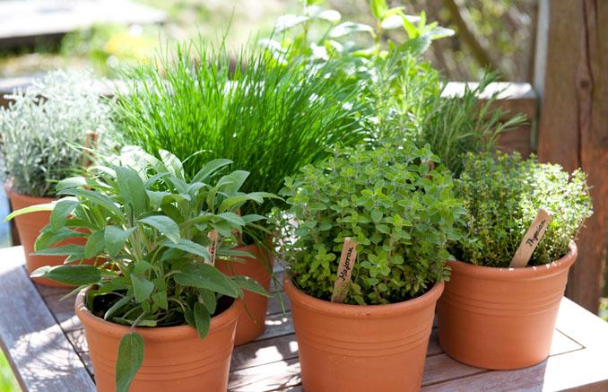 Kräuter anpflanzen mit der richtigen Erde und Dünger © Neudorff