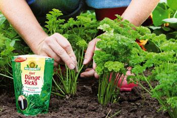 Dünge Sticks helfen der Pflanze © Neudorff
