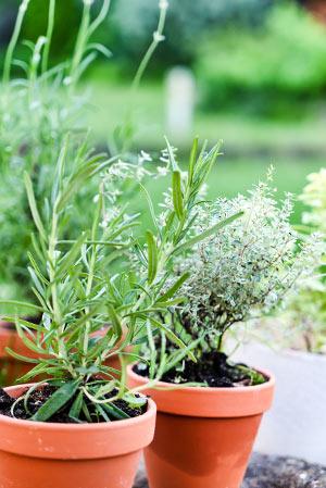 Küchenkräuter und Gemüse auf dem Balkon