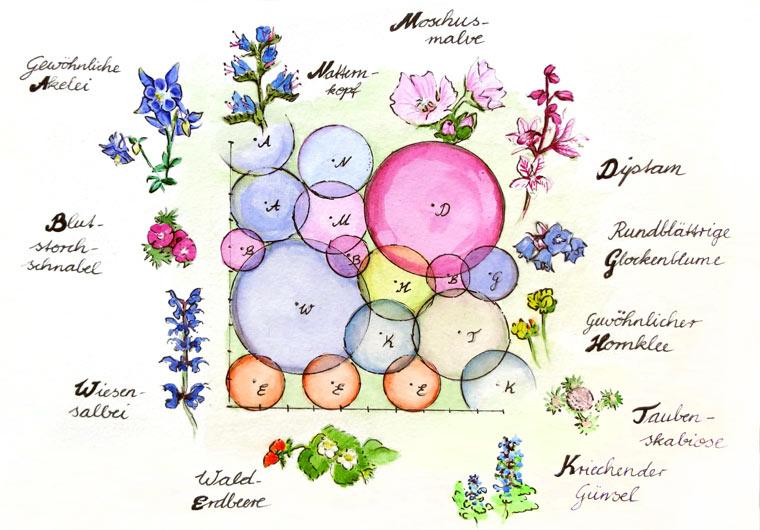 Mischkultur Pflanzplan