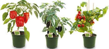 Naturtalent Pflanzen