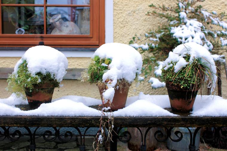 Pflanzen schneebedeckt