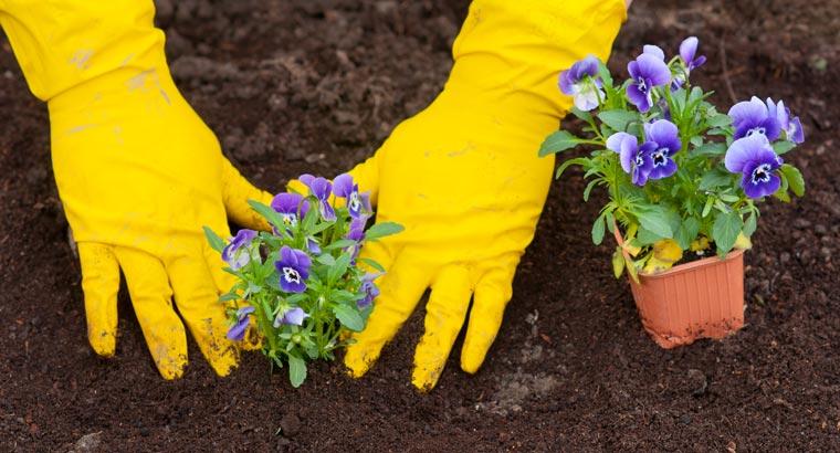 Durch den hohen Torf-Anteil in konventioneller Blumenerde wird die Umwelt belastet.