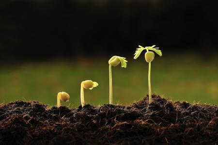 Nachhaltig leben: Gemüse und Blumen selbst ziehen aus Samen