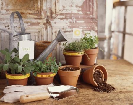 Nachhaltig leben: Wie Gemüse und Blumen selbst ziehen aus Samen