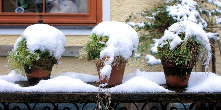 Welche Pflanzen kann ich vor der Kälte schützen?