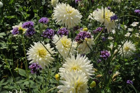 Bio Garten Tipps und Gartenarbeit im September