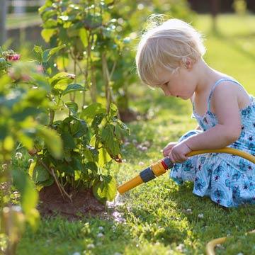 Pflanzen bei Hitze richtig pflegen und gießen