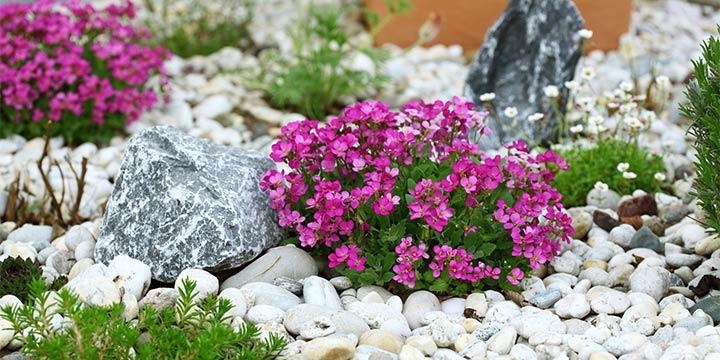 Pflegeleichte Pflanzen für Ihren Steingarten