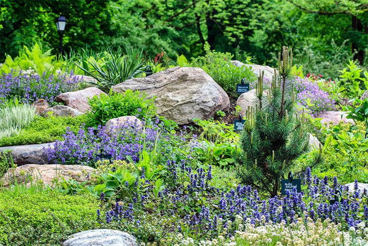 Steingarten mit Zwergkiefer