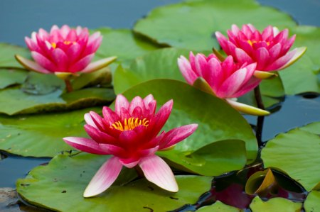 Teich anlegen nicht nur im Naturgarten.