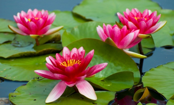 Teich im Naturgarten: Tierischer Planschspaß und gut für die Seele